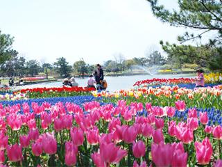 チューリップの祭りも開催される海の中道海浜公園の画像