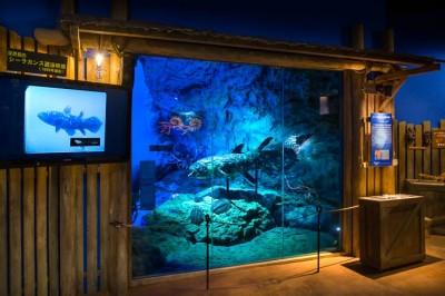 神奈川県の水族館_沼津港深海水族館の画像