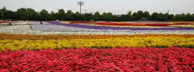 花の観光_なばなの郷の画像