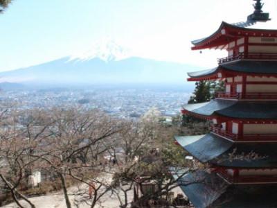 新倉山浅間公園で富士山と桜を楽しむイメージ画像