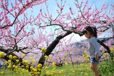 山梨の桃の花を見る子どものイメージ画像