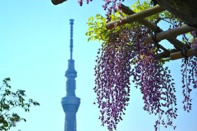 東京の藤の名所に子連れでおでかけのイメージ画像