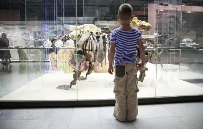 恐竜の化石を見る男の子
