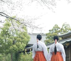 鎌倉エリア寒川神社を子連れでお散歩!のイメージ画像