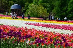 札幌公園スズラン丘陵公園の画像