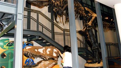 福井県立恐竜博物館ダイノラボの画像