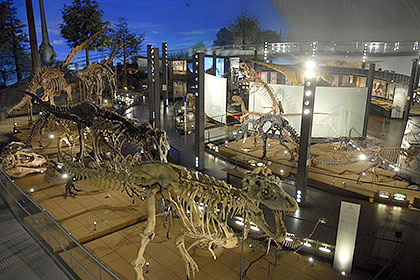 福井県立恐竜博物館標本の画像