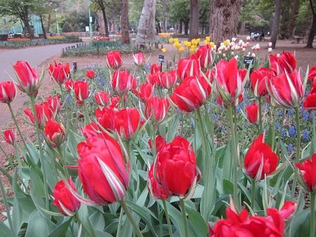 札幌公園円山公園の画像
