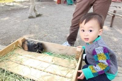 大阪、動物園、動物園の画像