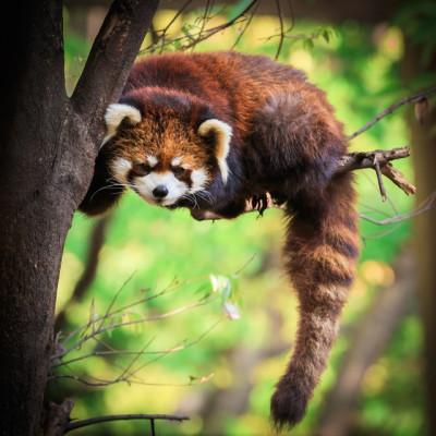 無料の動物園イメージ画像