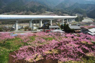 山梨の桃の花とリニア実験線のコラボレーションイメージ画像