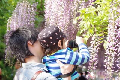 札幌の藤の花の名所に子連れでおでかけのイメージ