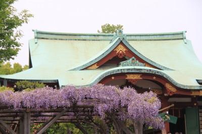 藤の名所亀戸天神社に子連れでおでかけの画像