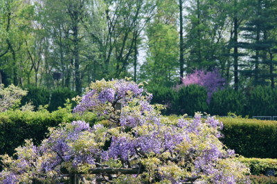 藤の名所神代植物公園に子連れでおでかけの画像