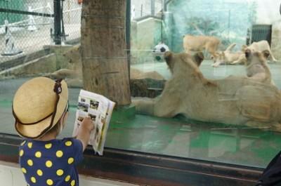 動物園、4月19日、ライオンの画像