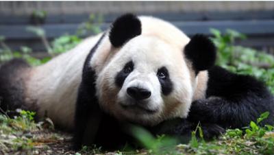 動物園、4月19日、パンダの画像