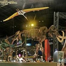 神奈川県立生命の星・地球博物館常設展