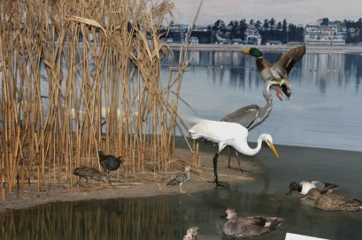 博物館千葉鳥の博物館の画像