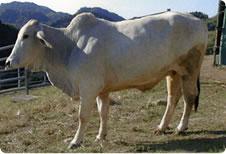千葉の牧場酪農のさとに子連れでおでかけ画像