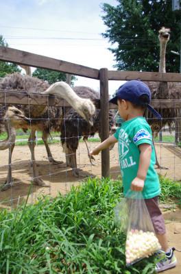 千葉の牧場ダチョウ王国に子連れでお出かけの画像