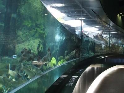 神奈川県の水族館_相模川ふれあい科学館の画像