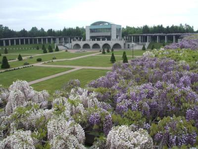 前田森林公園の藤の花の画像