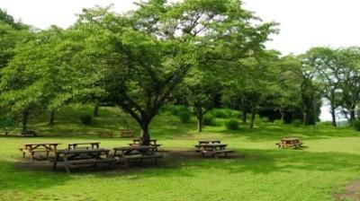 バーベキュー、深呼吸、森林公園の画像