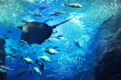 神奈川県の水族館_新江ノ島水族館の画像