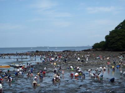 神奈川県の潮干狩り_走水海岸の画像