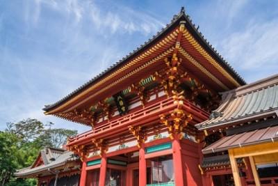 カウントダウン、うっとり、藤、見頃、鶴岡八幡宮の画像