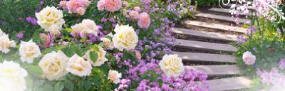 バラ、名所、祭り、イベント、見頃、イングリッシュガーデンの画像
