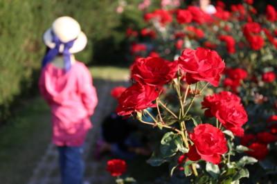 福岡県のバラの名所へ子連れでおでかけのイメージ画像