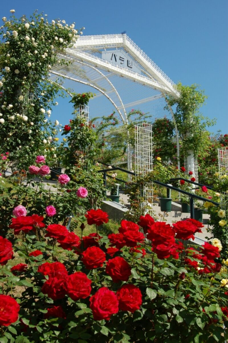 バラ公園広島市の画像