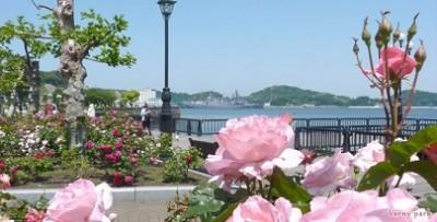 バラ、名所、祭り、イベント、見頃、ヴェルニー公園の画像