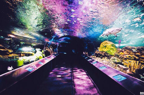 梅雨に神奈川の八景島シーパラダイスの水族館がおすすめ