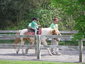 ポニーに乗る小田原わんぱく公園の画像