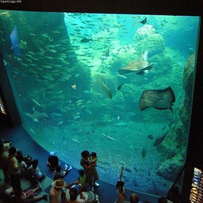 子どもに人気の新江ノ島水族館の巨大な水槽を見る子ども達の画像