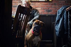 pet-friendly cafe
