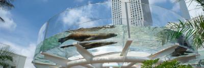 池袋のサンシャインシティにある高層階の水族館の画像