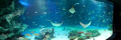 池袋のサンシャインシティにある高層階の水族館の水槽の画像
