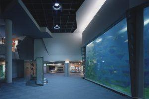 千歳サーモンパークサーモンパビリオン建設工事 水槽展示室  工事概要:北海道千歳市花園 鉄筋コンクリート造3階建(地上部2階、地下1階) 一部鉄骨造 2,950.79㎡