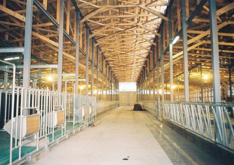 細川牧場新築 牛舎 内部  工事概要:北海道八雲町緑町 細川牧場 牛舎新築 鉄骨造2階建 2,022㎡