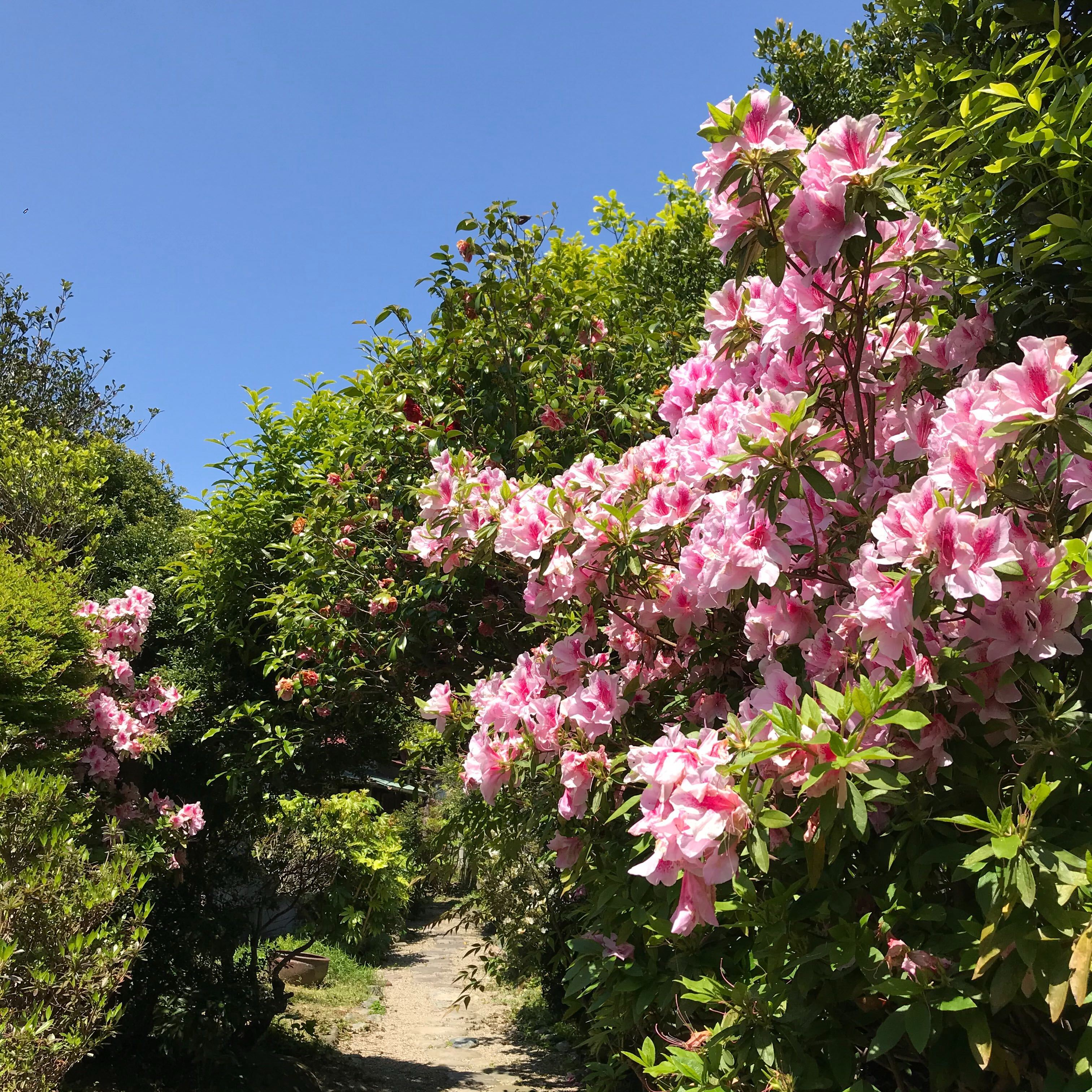【施設運営レポート】ツツジ咲く葉山の春
