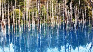 美瑛町の青い池に行って来ました。