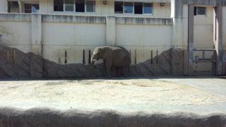 癒しの動物園へ