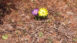 小さい春みつけた、!