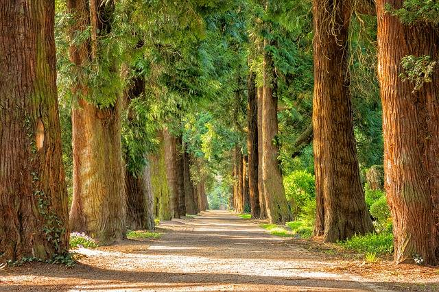 Avenue Trees Away · Free photo on Pixabay (23780)