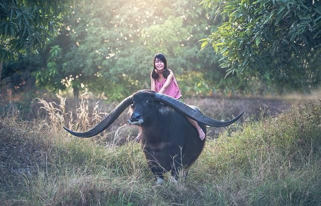 Buffalo Girl Seat · Free photo on Pixabay (53686)