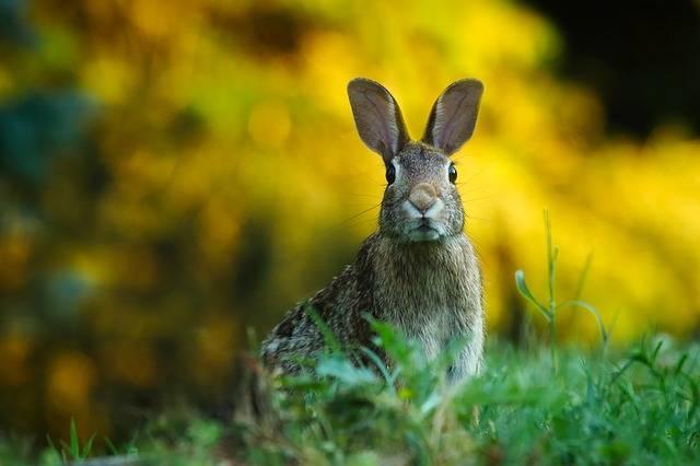 Rabbit Hare Animal · Free photo on Pixabay (68739)