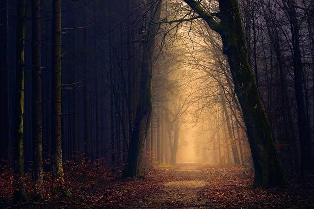 Wood Forest Light - Free photo on Pixabay (81125)